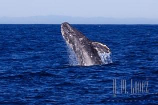Whales SD  093