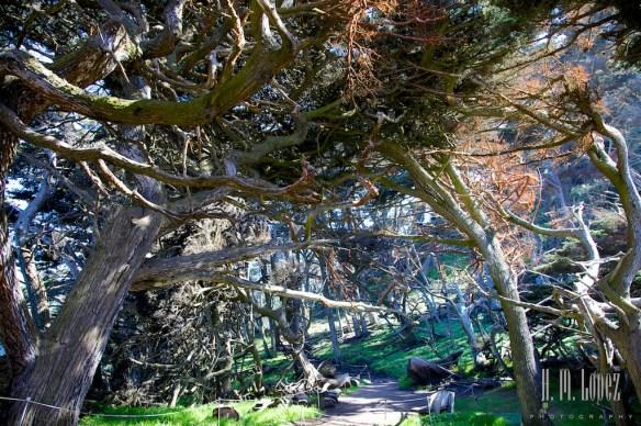 Point Lobos  024