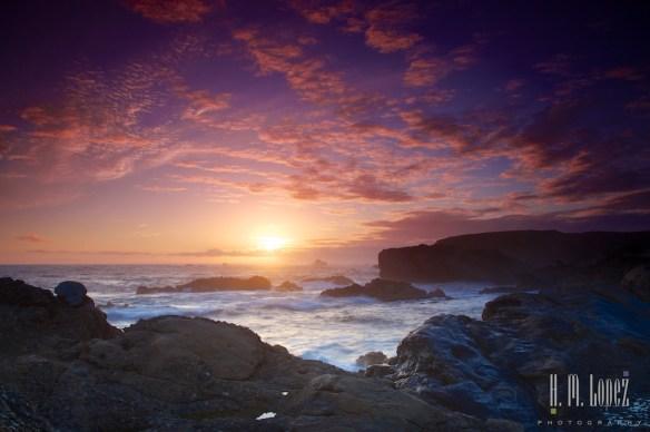 Point Lobos  046