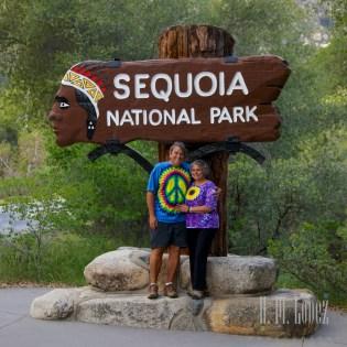 Sequoia  006