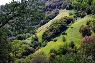 Sequoia  029