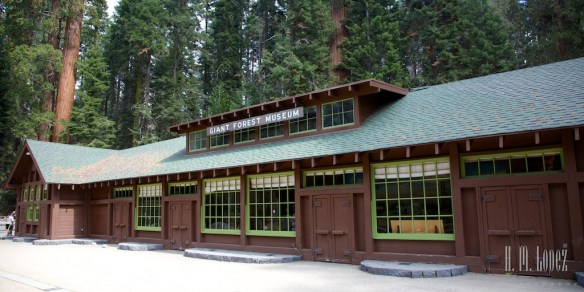 Sequoia  039