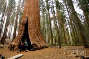 Sequoia  048