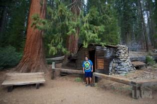 Sequoia  049