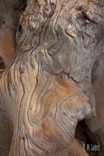 Sequoia 052