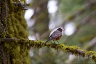 Sequoia  058