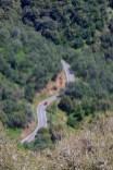Sequoia 070