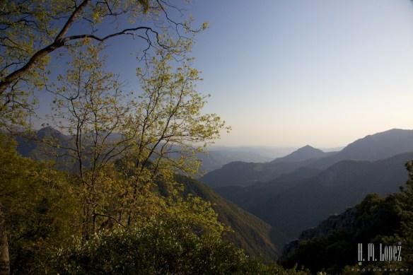 Sequoia  096