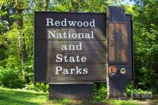 north redwoods  013