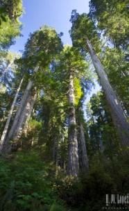 north redwoods  043