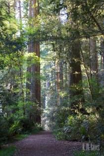 north redwoods  045