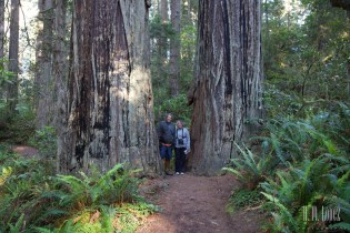 north redwoods  047