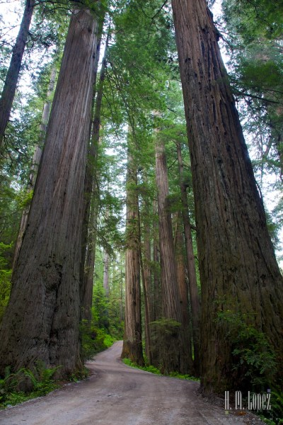 north redwoods  074