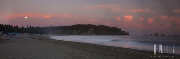 Olympic Coast  041