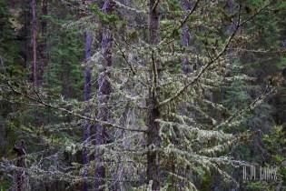 Banff  050