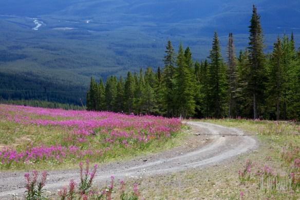 Banff  157