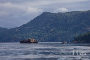 Campbell River  009