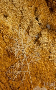 yellowstone  055