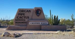 Organ pipe  001