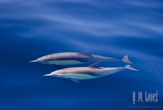 Dolphins Two