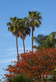 San Diego 15  016