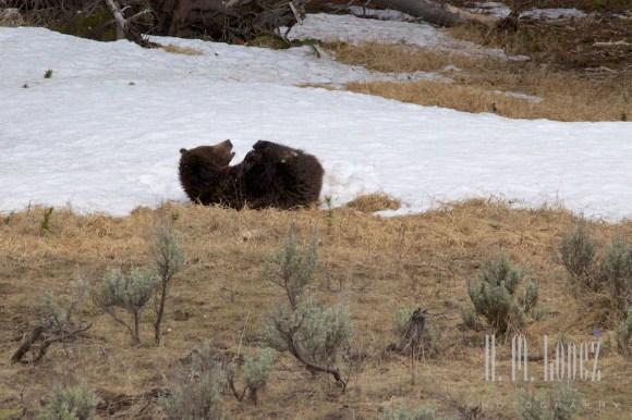 Yellowstone Madison029