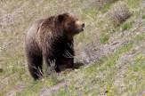 Yellowstone Madison076