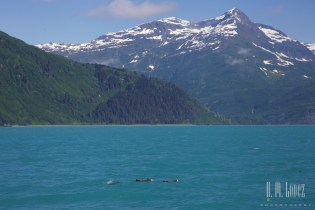 Prince William Sound011