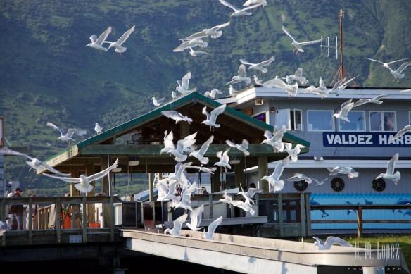 Valdez 60