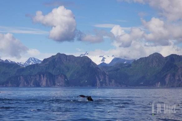 Kenai Fjords NP 79