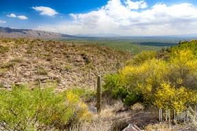 Tucson-88