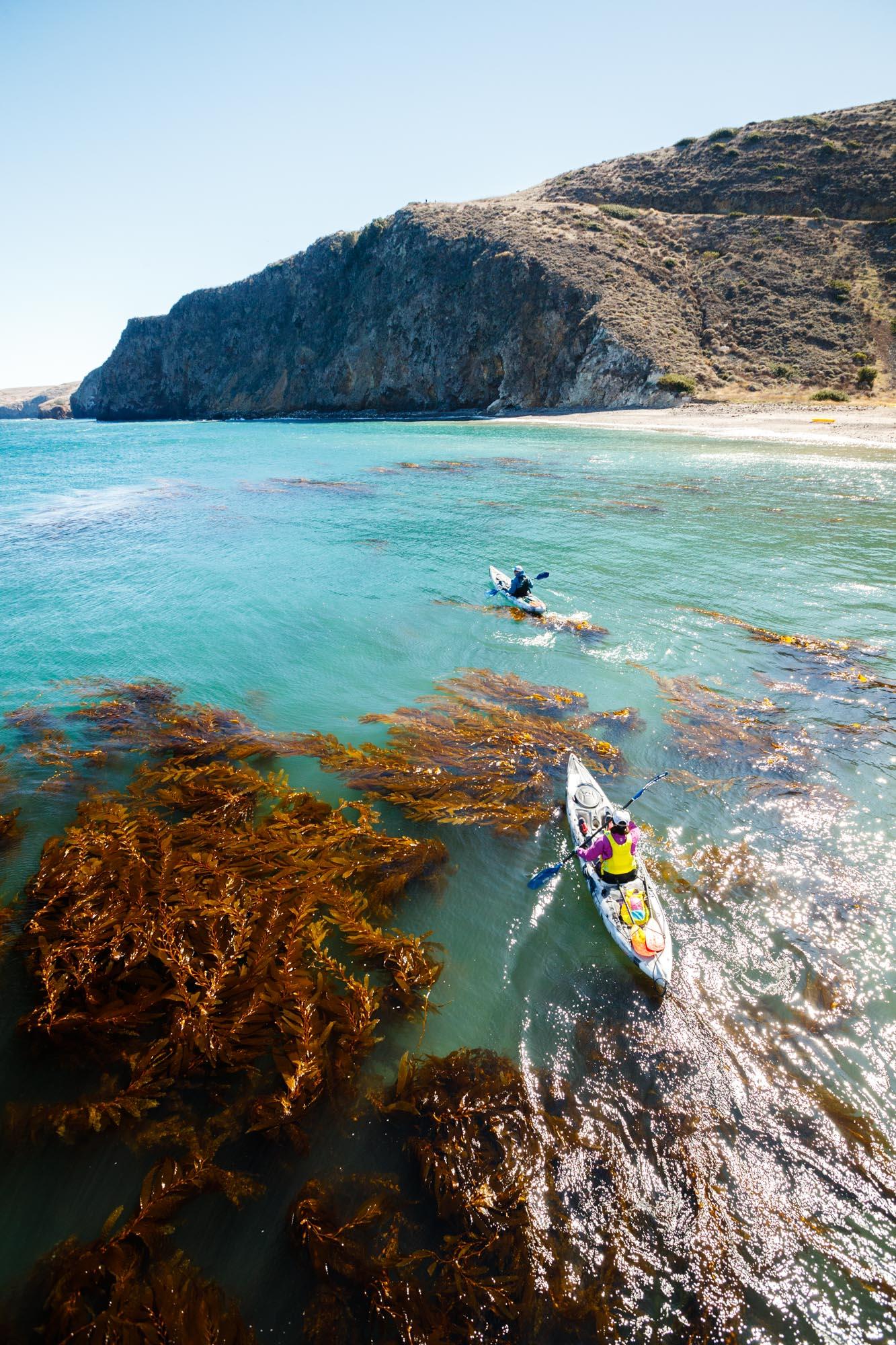 Kayak Tours - Channel Islands Adventure Company   Kayaking