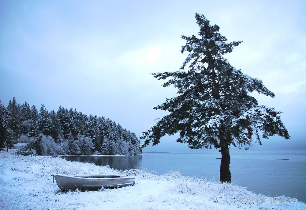 West Coast Chirstmas Winter Landscape Photo From Cortes