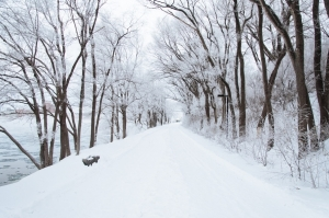 cold-snow-forest-trees-large