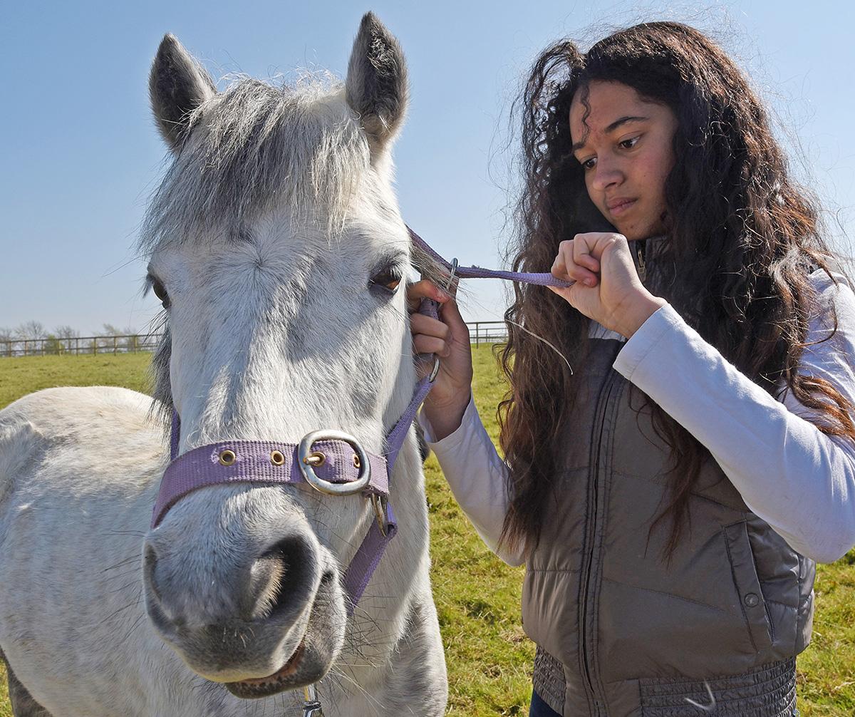Own a Pony