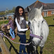 Horses at Island Riding Centre