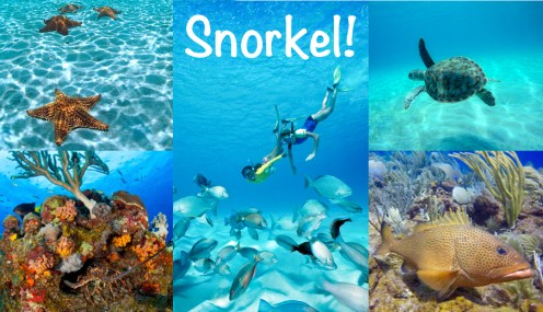Offering our local knowledge to get you to the best snorkeling destinations in the Islands!