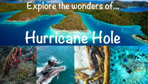 One of six tour operators with permitted access to take you to Hurricane Hole!