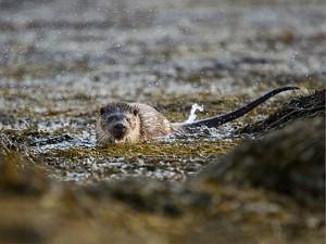 otter-photograph
