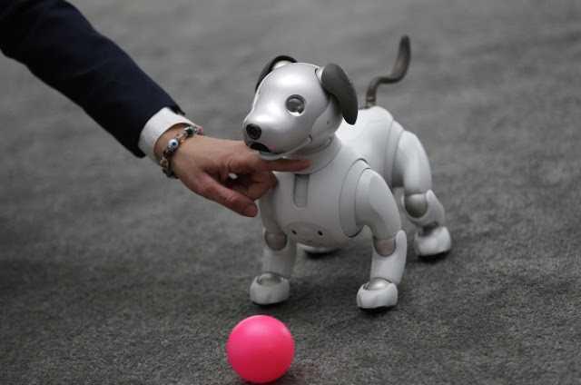 Sony, Salı günü çok daha keskin ve daha sofistike bir Aibo robot köpeği çıkardı ve gerçek köpek gibi gösteriler yaptı.