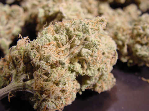 , Nebula Cannabis Strain Review
