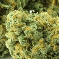 , Green Crack Cannabis Strain Review