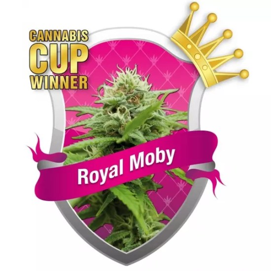 , ISMOKE Competition Time (Even More Free Cannabis Seeds to Give Away)