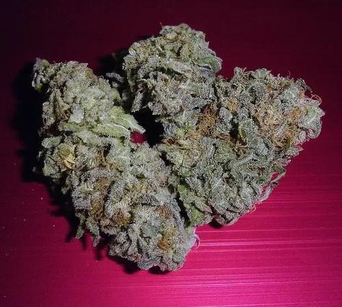 , Ice Cream and Sensi Star Cannabis Strain Reviews