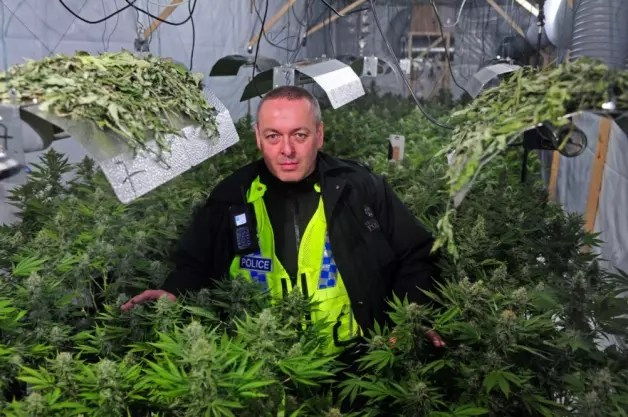 , Reading Smoke Signals: Signs from the U.S. That Legalisation of Cannabis Could Benefit the U.K.