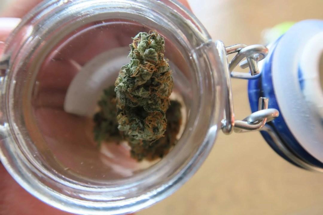 How to cure cannabis, How to Cure Cannabis, ISMOKE