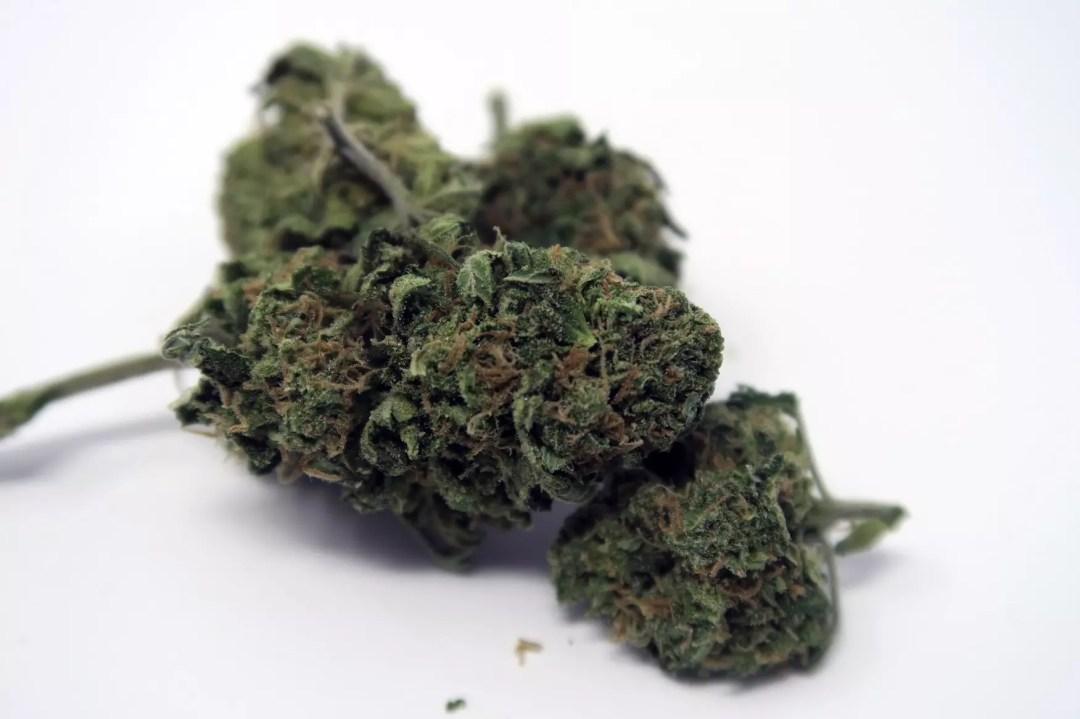 , Blue Cheese Cannabis Strain Review, ISMOKE