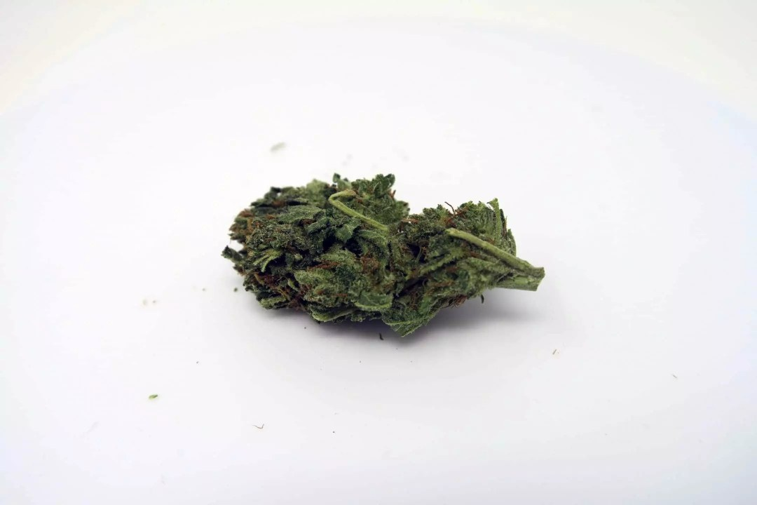 , Hawaiian Haze Cannabis Strain Review