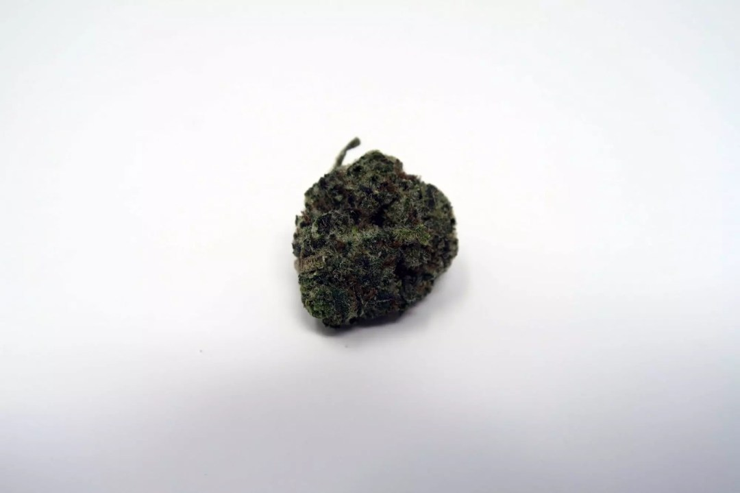 Girl Scout Cookies, Girl Scout Cookies Cannabis Strain Information, ISMOKE