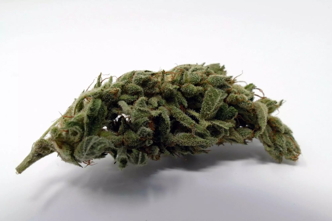 Gorilla Glue #4, Gorilla Glue #4 Cannabis Strain Information & Review, ISMOKE